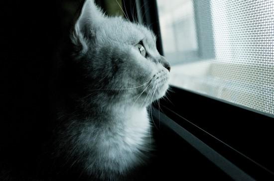 cat-571105_1280