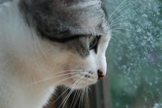 cat-607778_1280